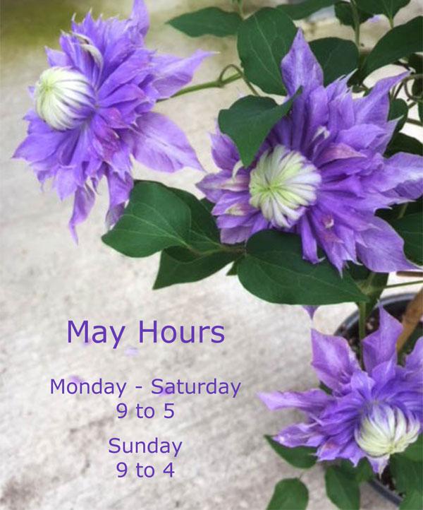 May-Hours-2018.jpg