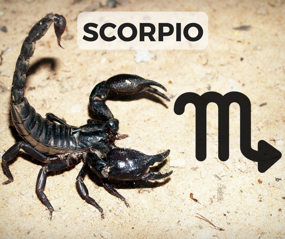 The SCORPIO Signs + Symbol (icon designed by Freepik!)