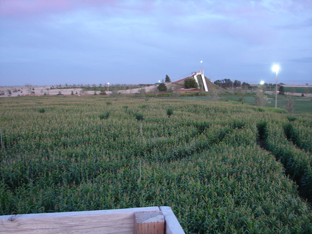 maze pictures 2009 005.jpg