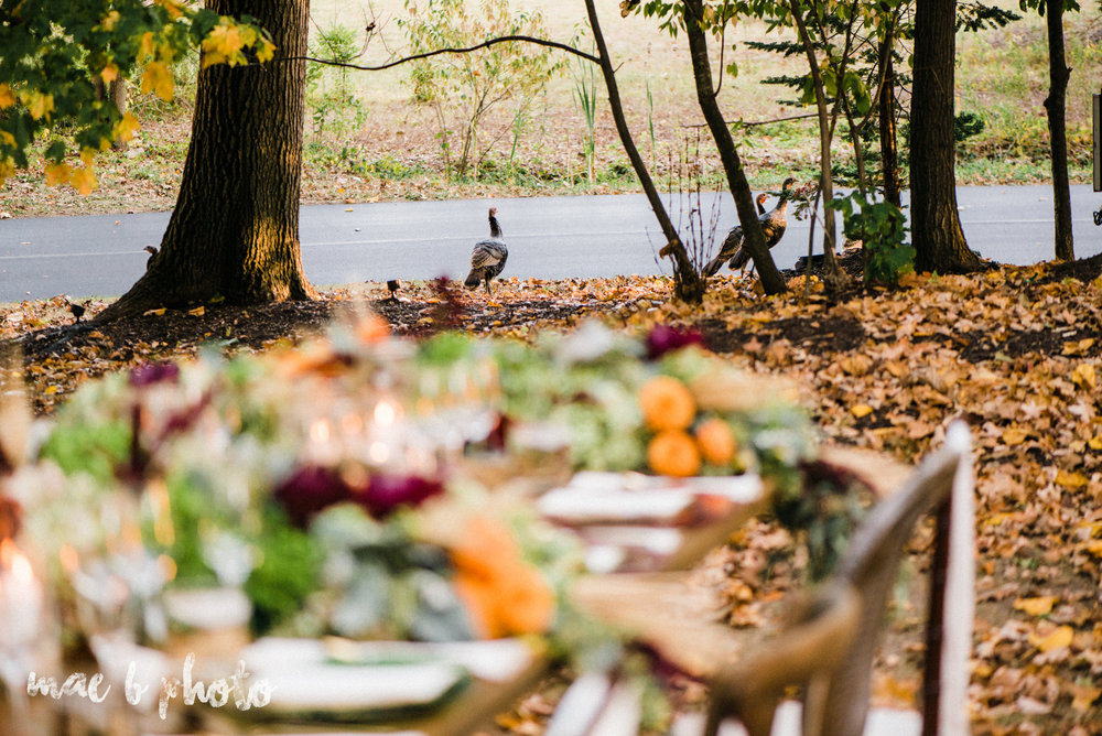 dinner under the trees intimate fall dinner party in youngstown ohio hosted by joe mineo of joe mineo creative with chrystal's catering photographed by youngstown wedding photographer mae b photo-21.jpg