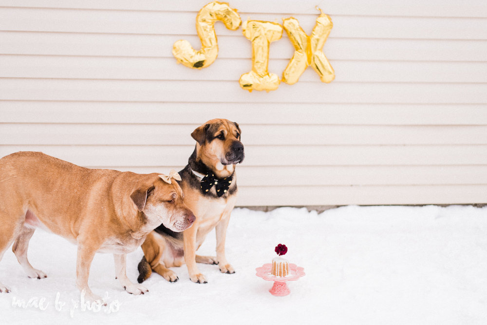 meat and sophie's winter gold glam sixth puppy birthday party in youngstown ohio photographed by youngstown wedding photographer mae b photo-19.jpg