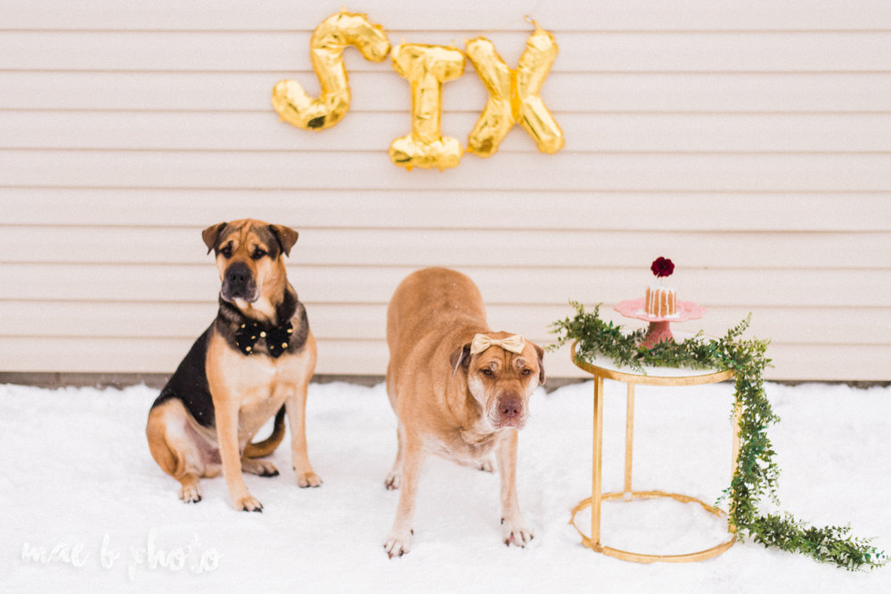 meat and sophie's winter gold glam sixth puppy birthday party in youngstown ohio photographed by youngstown wedding photographer mae b photo-10.jpg