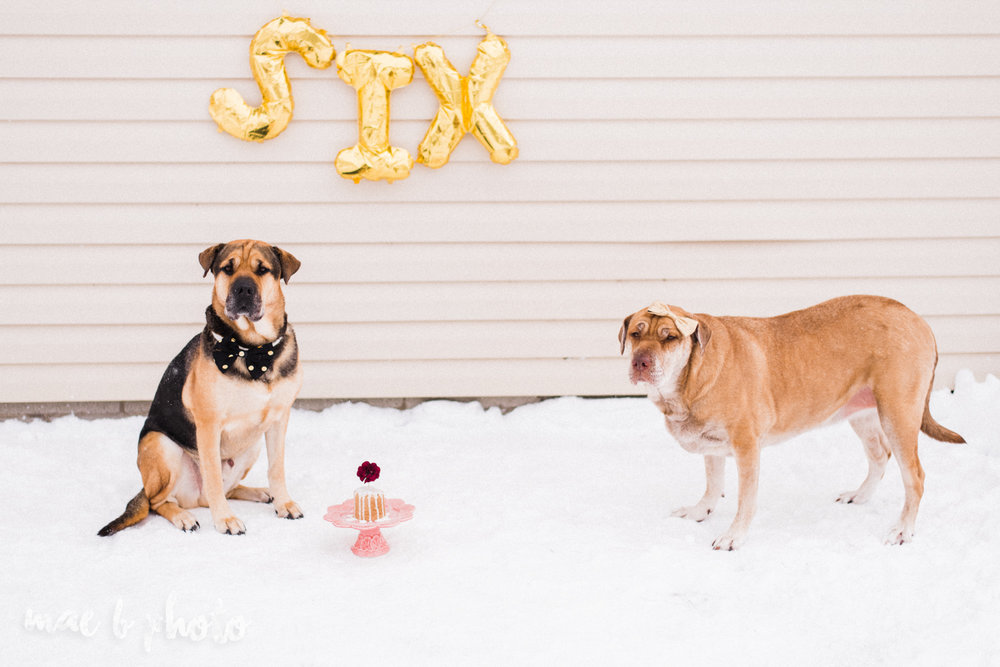meat and sophie's winter gold glam sixth puppy birthday party in youngstown ohio photographed by youngstown wedding photographer mae b photo-16.jpg