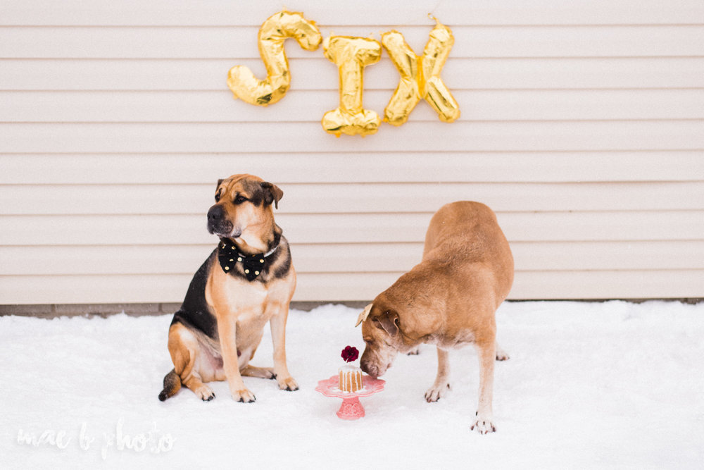 meat and sophie's winter gold glam sixth puppy birthday party in youngstown ohio photographed by youngstown wedding photographer mae b photo-20.jpg