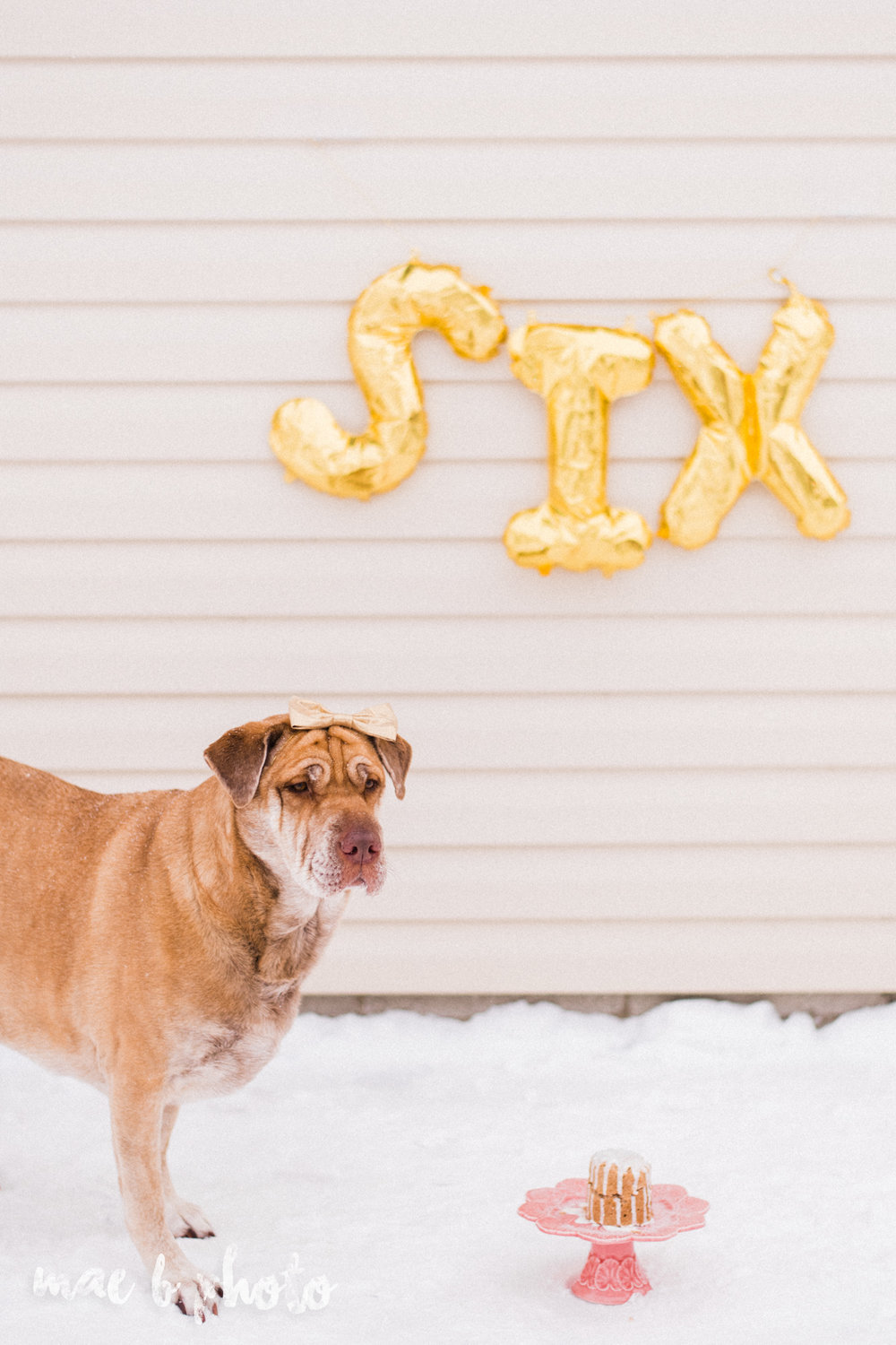 meat and sophie's winter gold glam sixth puppy birthday party in youngstown ohio photographed by youngstown wedding photographer mae b photo-25.jpg
