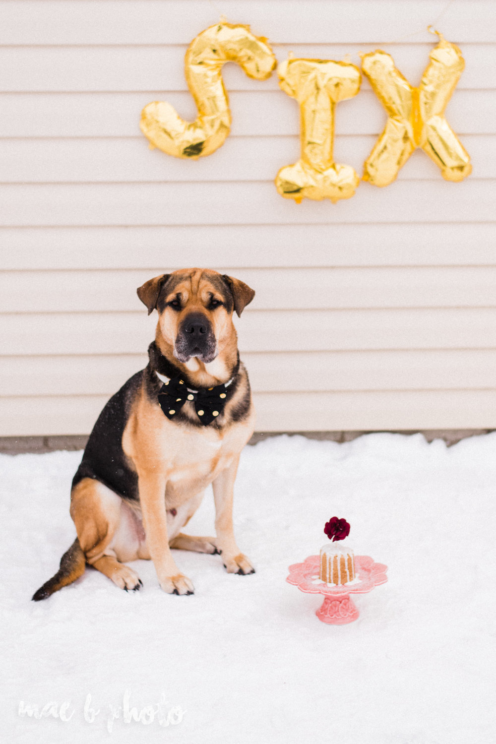 meat and sophie's winter gold glam sixth puppy birthday party in youngstown ohio photographed by youngstown wedding photographer mae b photo-17.jpg