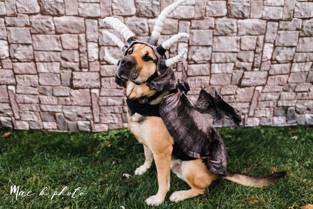 mae and lou's game of thrones fall october halloween pregnancy announcement with dog halloween dragon costumes diy dog costumes diy dragon costumes and daenerys targaryen mother of dragons dragon eggs and jon snow king of the north-39.jpg