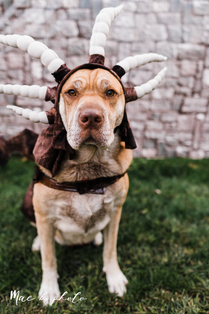 mae and lou's game of thrones fall october halloween pregnancy announcement with dog halloween dragon costumes diy dog costumes diy dragon costumes and daenerys targaryen mother of dragons dragon eggs and jon snow king of the north-35.jpg