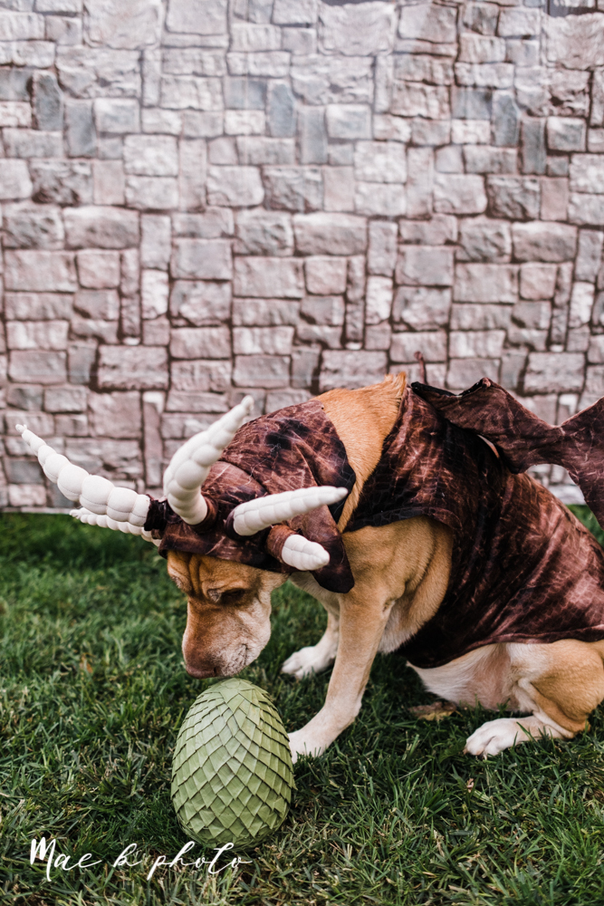 mae and lou's game of thrones fall october halloween pregnancy announcement with dog halloween dragon costumes diy dog costumes diy dragon costumes and daenerys targaryen mother of dragons dragon eggs and jon snow king of the north-46.jpg