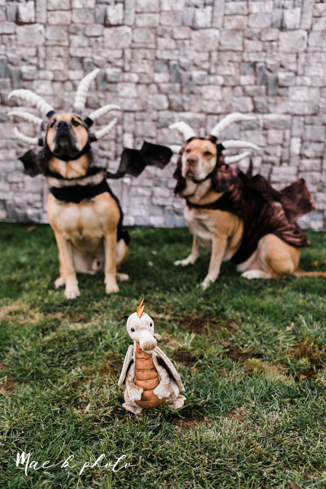 mae and lou's game of thrones fall october halloween pregnancy announcement with dog halloween dragon costumes diy dog costumes diy dragon costumes and daenerys targaryen mother of dragons dragon eggs and jon snow king of the north-57.jpg