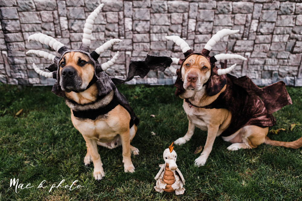 mae and lou's game of thrones fall october halloween pregnancy announcement with dog halloween dragon costumes diy dog costumes diy dragon costumes and daenerys targaryen mother of dragons dragon eggs and jon snow king of the north-59.jpg