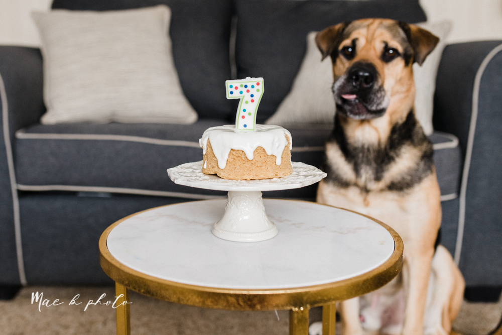 meat and sophie's seventh birthday dog birthday party winter bithday in youngstown ohio photographed by youngstown wedding photographer mae b photo-1.jpg