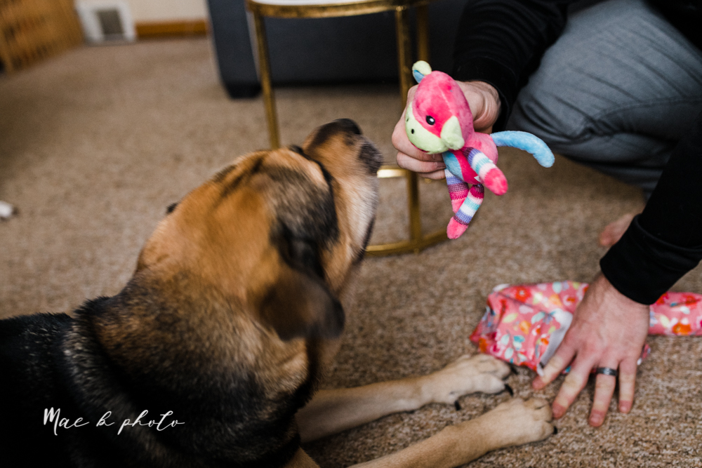 meat and sophie's seventh birthday dog birthday party winter bithday in youngstown ohio photographed by youngstown wedding photographer mae b photo-17.jpg