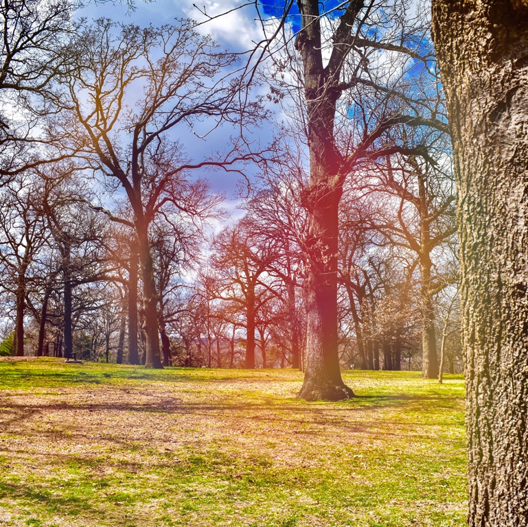 Woodward Park - Tulsa Photography