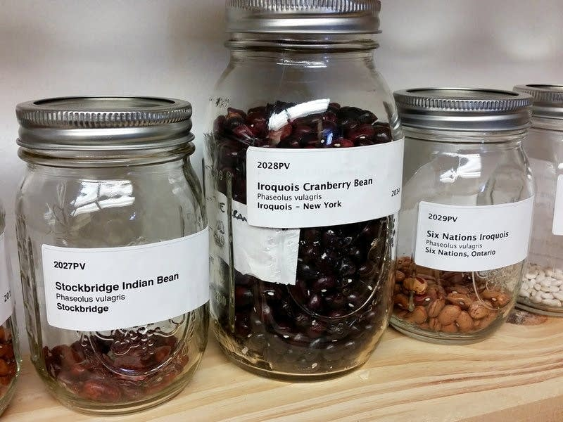 The seed library maintained by the Jijak Foundation contains dozens of native varieties of corn, beans, tobacco, watermelon and ancient squash.     Rebecca Williams | Michigan Radio