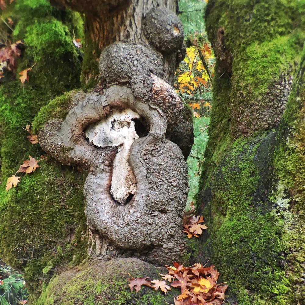 Snoopy in a Tree