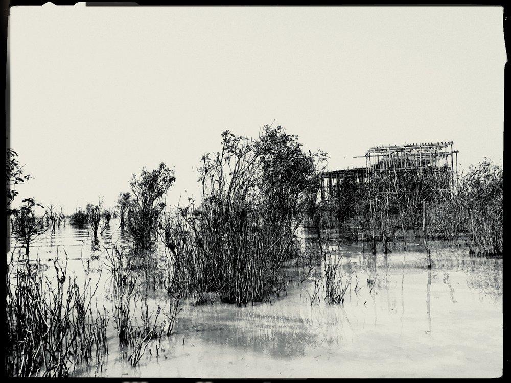 What Grows in Tonle Sap Lake