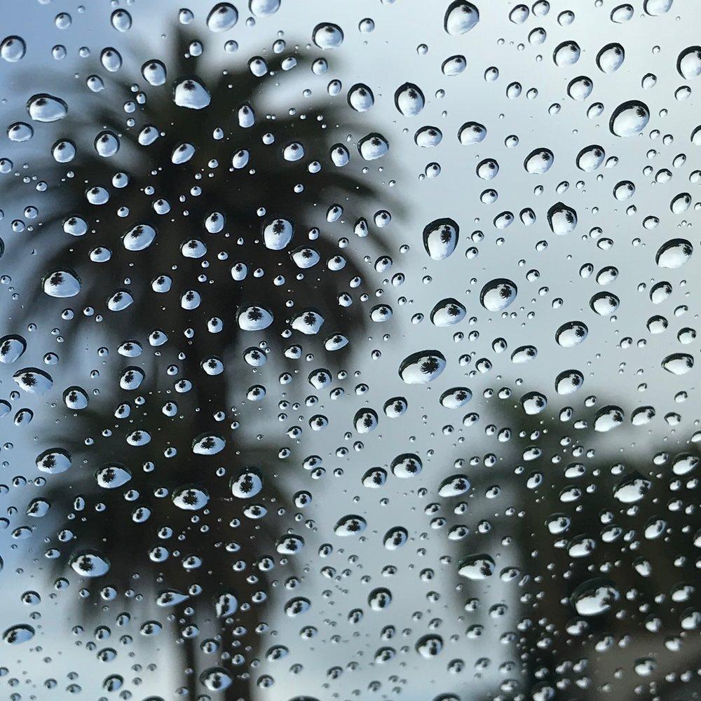 It Rained in LA!