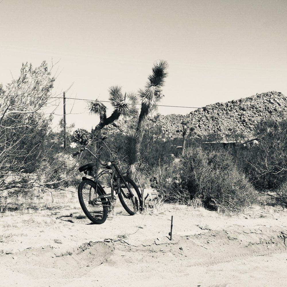 Bicycle in Joshua Tree