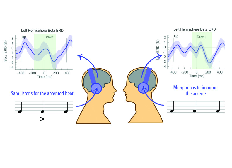 Figure 1: The green sections of Sam and Morgan's beta-ERD graphs look similar. Thus the authors saw that imagining an accent on the downbeat showed similar changes in beta band activity as physically hearing the accent. All participants of the study completed both conditions. Figure design by  Malika Kumar . Beta-ERD graphs are reproduced from Fujioka et al.  [2] .