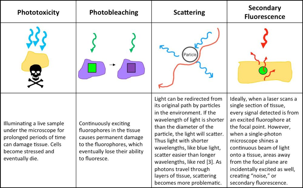 Table 1: Fluorescence Microscopy Pitfalls. Image Credit: Stephanie DeMarco and Victoria Sun,  Skull & Crossbones  image is licensed under  CC BY-SA 3.0 .