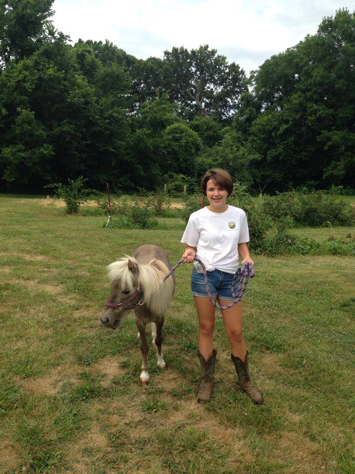 Molly the mini horse