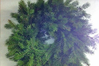 "Douglas Fir Wreath  Available in 3 sizes: 18"" 22"" 28"""