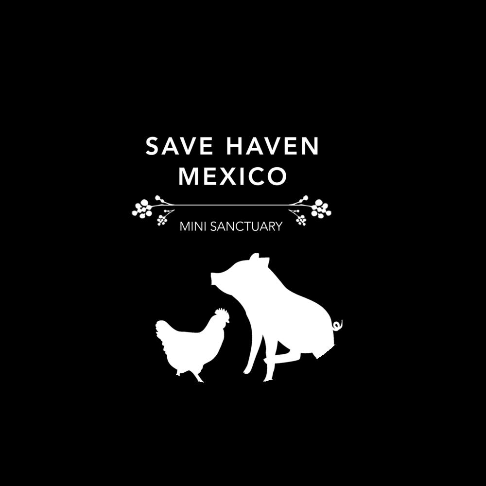 SAVE HAVEN MEXICO - logo design