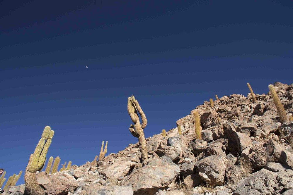 El Valle de los Cactus