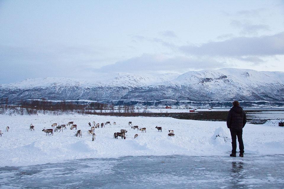 Seguimos a un reno sigilosamente y nos guió hasta su manada