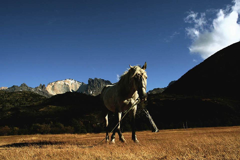 Caballo en Torres del Paine.jpg