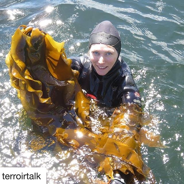 """#Repost @terroirtalk ・・・ """"Have you ever met a seaweed farmer? Now's your chance!  Get your early-bird tickets now to hear from the founder of @MermaidFare - a company specializing in the commercialization of wild and cultivated sea vegetables from the Atlantic Canadian Maritime Provinces - on the #Terroir2019 stage in Toronto! 📣 TerroirSymposium.com""""  #SeeTorontoNow #DiscoverOn #ExploreCanada #CanadaisFood #EastCoastCanada #seaweed #foodsystem @TerroirHospitality"""