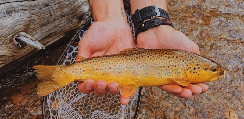 Jakob Brown Trout Blog.jpg