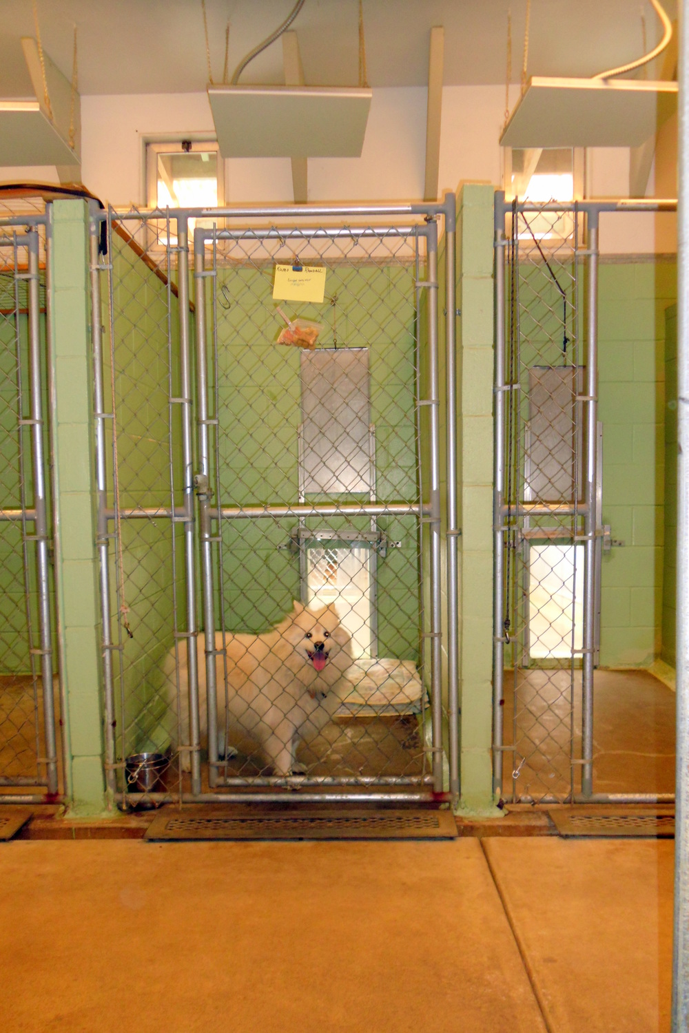 Kennel Indoors
