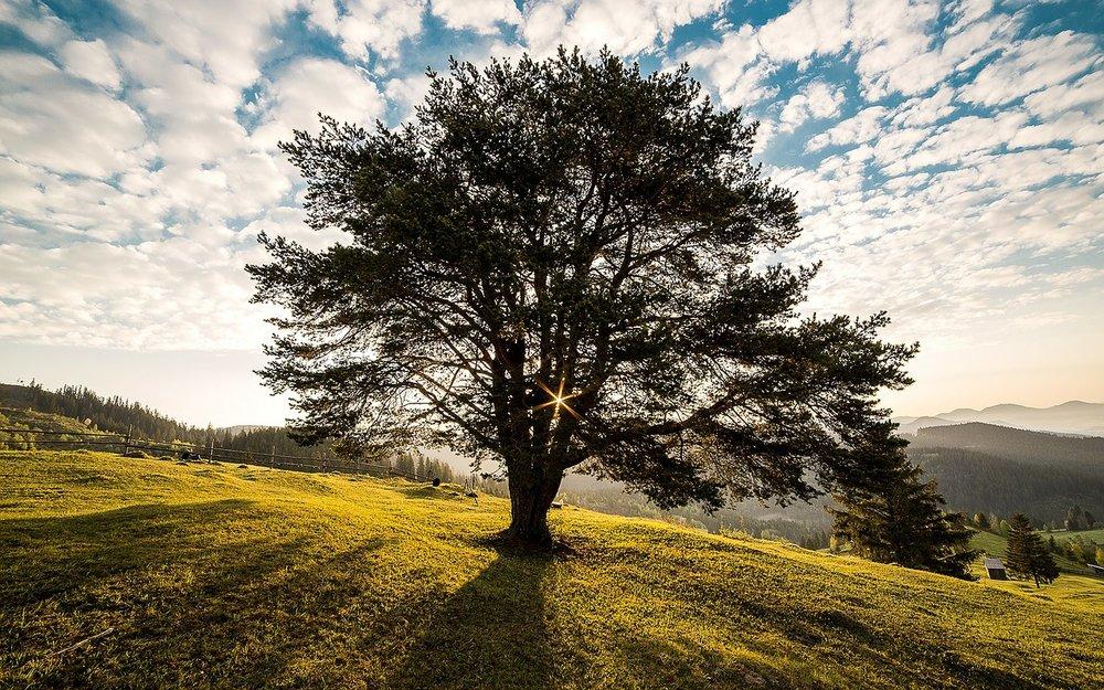 Pixabay - tree
