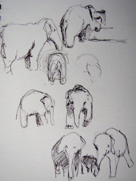 More Elephants
