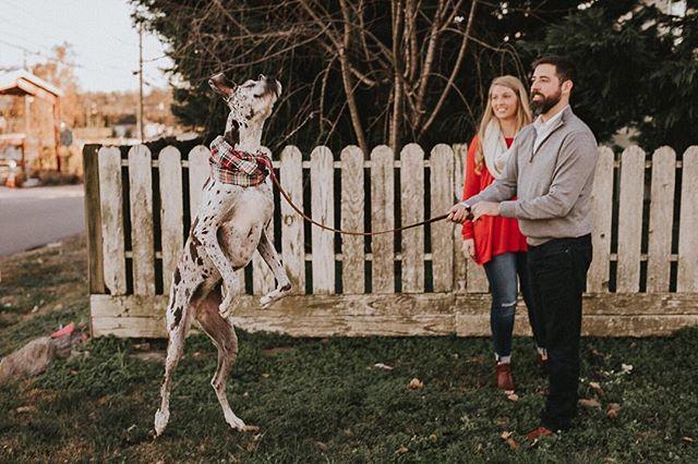 When your dog steals the show 😂 💩 ➕➕➕➕➕➕➕➕➕➕➕ #nashvillefamilyphotographer #nashvillephotographer #12thsouth #documentyourdays #lifestylephotography