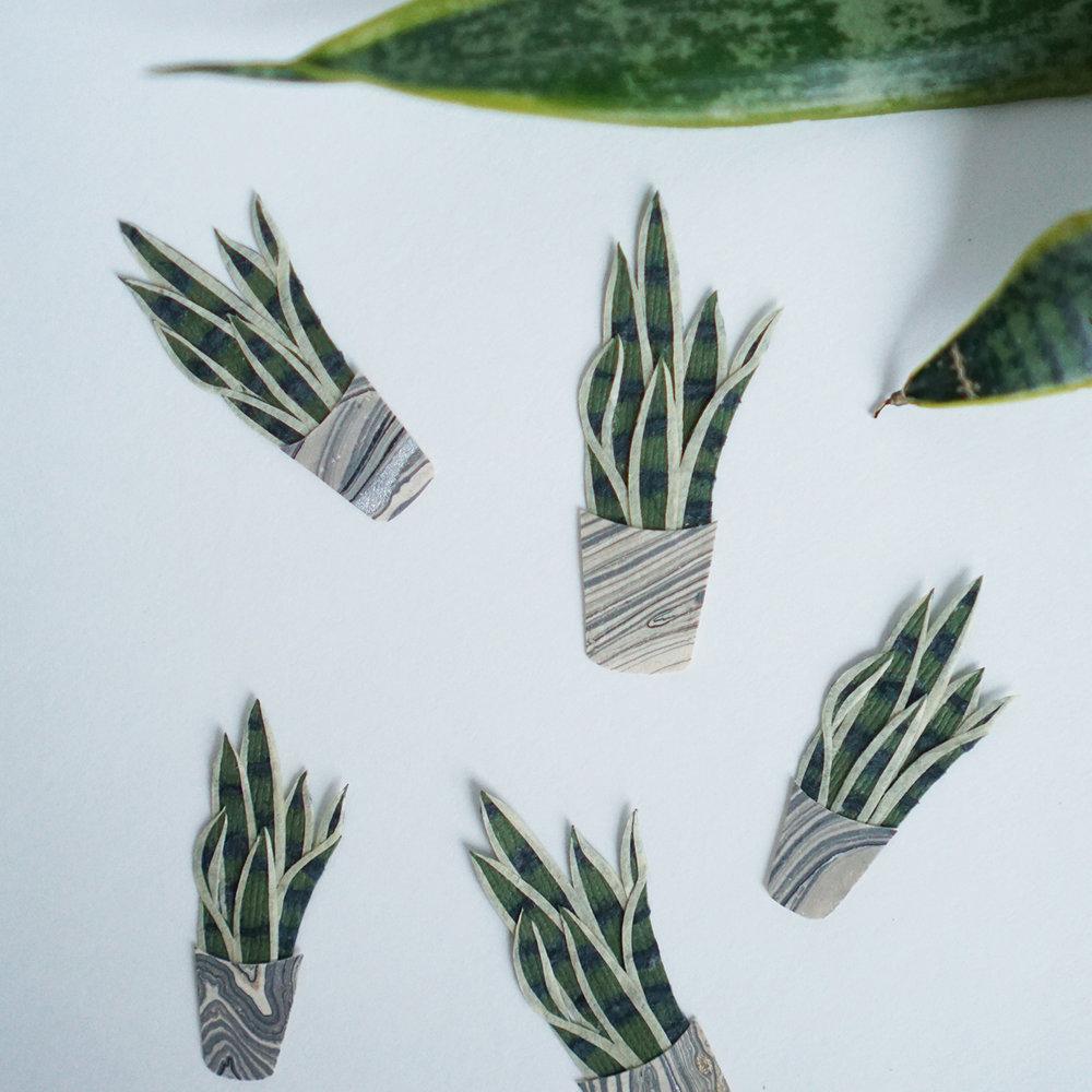 Snake Plant Tara Galuska Paper Art.jpg