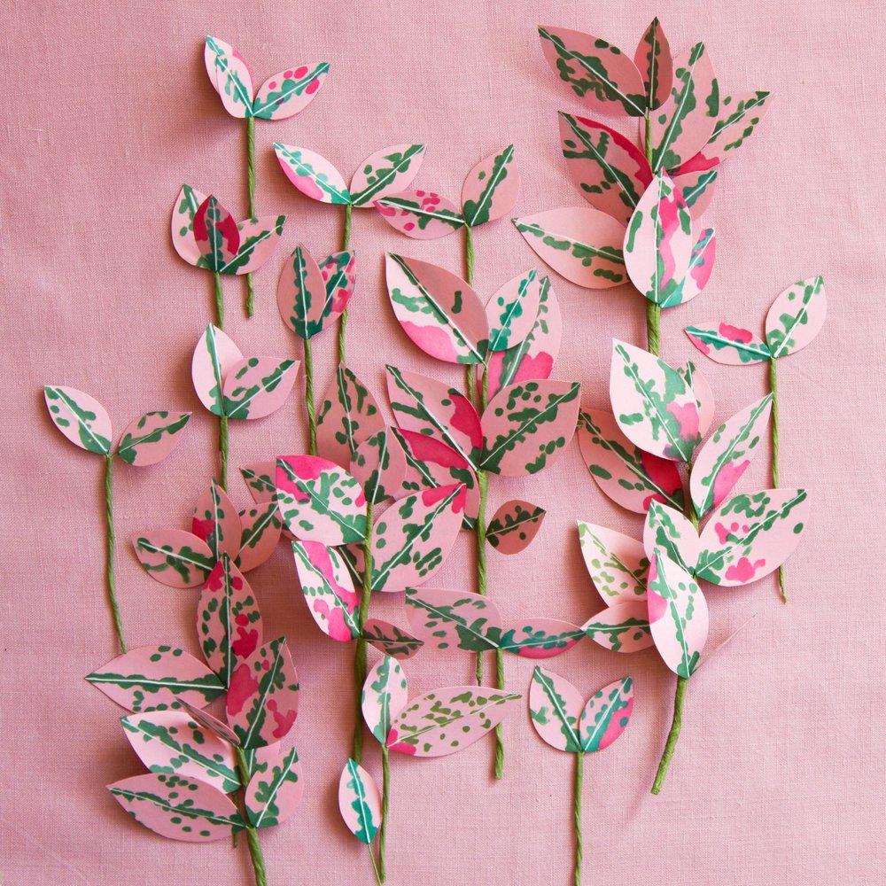 CorrieBethHogg_pink_pink2.jpg