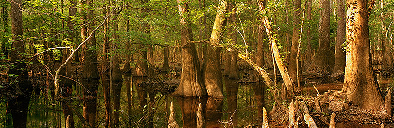 Congaree National Park, Biosphere Reserve, South Carolina