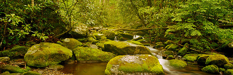 Great Smoky Mountains National Park, World Heritage Site, Biosphere Reserve,  Tennessee, North Carolina