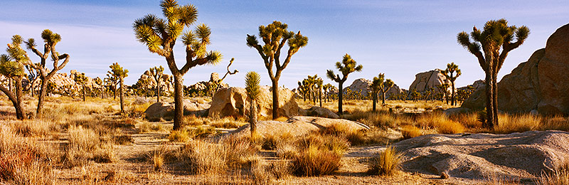 Joshua Tree National Park, Biosphere Reserve, California