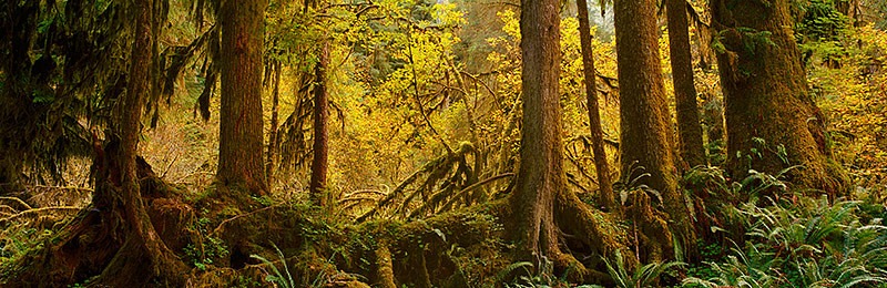 Olympic National Park, World Heritage Site, Biosphere Reserve, Washington