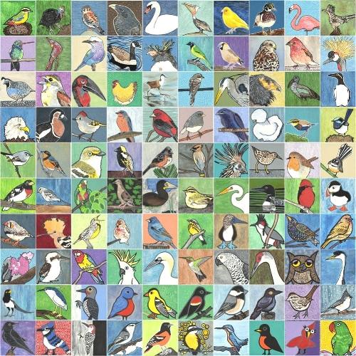 Full set of 100 birds