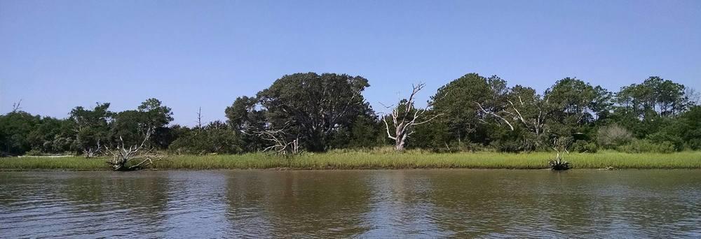 driftwood banks.jpg