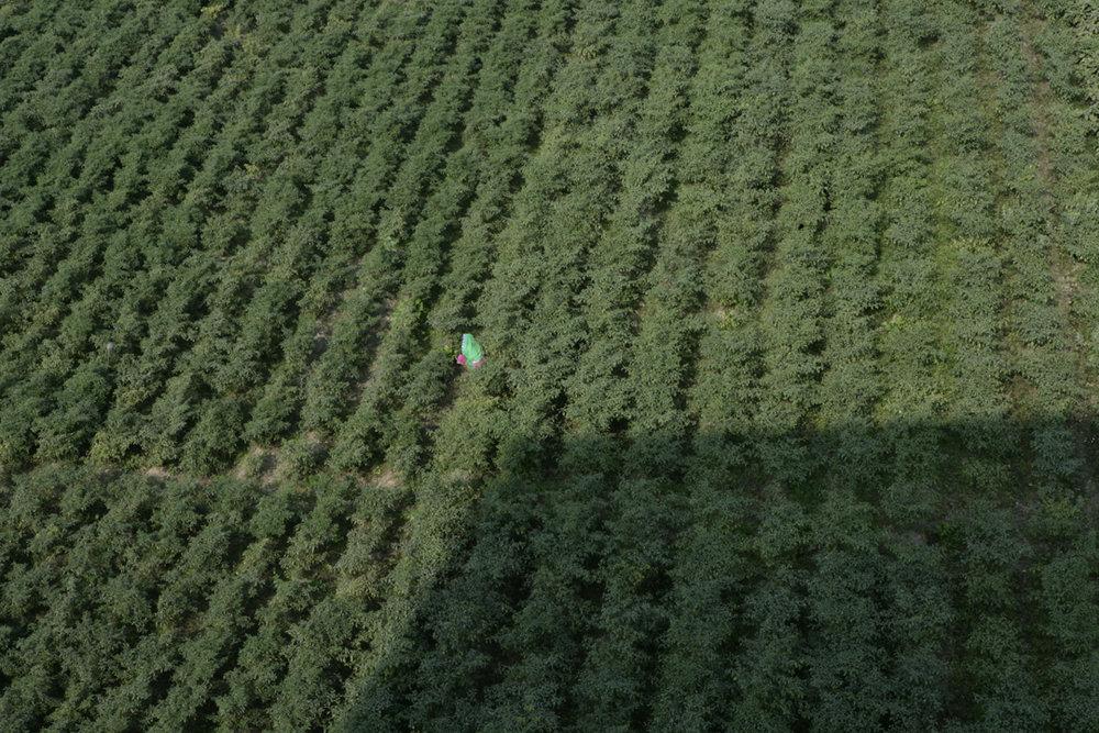 field71.jpg