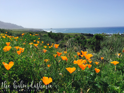 the california poppies are the subject of this gorgeous vista in big sur