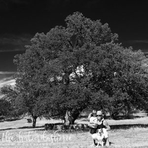 the subject of this pic is this gorgeous old oak tree... my daughter, our dog + me add to the story, but the focus remains the size + shape of this massive specimen • 'noir' filter