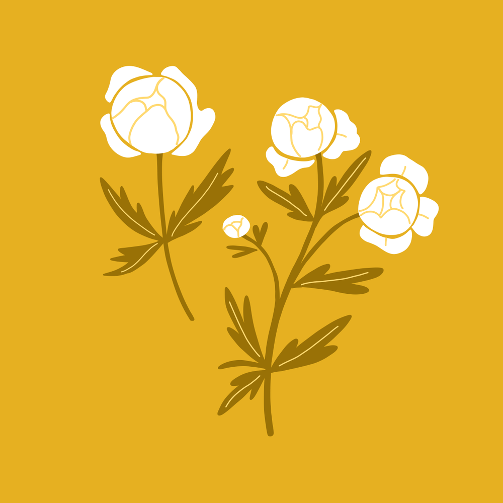Globe flower illustration | Color Diaries: Yellow by Pace Creative Design Studio