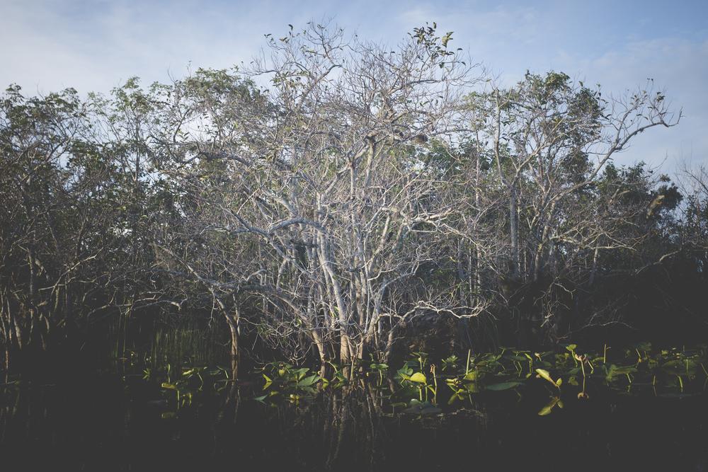 Dwyer_Everglades-4.jpg